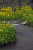 Fiori gialli sulla banca di un fiume Fotografia Stock Libera da Diritti