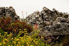 Fiori gialli sulla montagna della Tabella vicino a Cape Town immagini stock