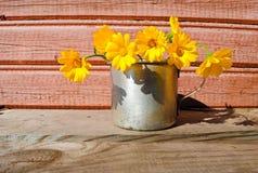 Fiori gialli sulla superficie di legno non dipinta Immagine Stock