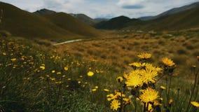 Fiori gialli in una valle Immagini Stock Libere da Diritti