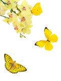Fiori giallo-chiaro dell'orchidea e tre farfalle Fotografie Stock Libere da Diritti