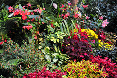 Fiori in giardini Immagini Stock Libere da Diritti