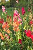 Fiori in giardino Fotografie Stock