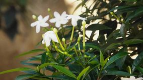 Fiori in giardino che si muovono verso l'aria stock footage