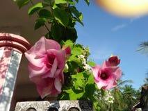 Fiori & giardino domestico fotografie stock
