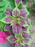 Fiori & giardino domestico fotografia stock