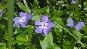Fiori - giardino - fiore fotografia stock libera da diritti