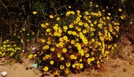 Fiori in giardino selvaggio fotografie stock libere da diritti