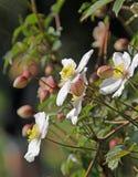 Fiori graziosi di primavera Immagini Stock