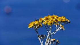 Fiori insetto e cielo blu fotografia stock libera da diritti