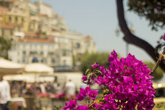 fiori italiani europei vaghi Immagine Stock