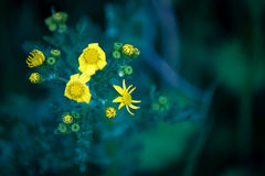 Fiori leggiadramente gialli Fotografia Stock Libera da Diritti