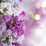 Fiori lilla Fotografie Stock Libere da Diritti