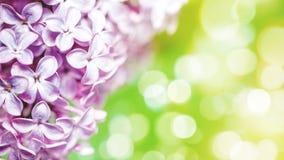 Fiori lilla con il bokeh di bellezza Fotografia Stock Libera da Diritti