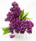 Fiori lilla di estate in vaso Immagini Stock Libere da Diritti