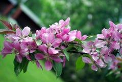 Fiori lilla e fondo verde Fotografie Stock Libere da Diritti