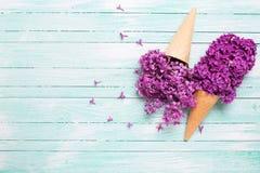 Fiori lilla freschi nei coni della cialda sul backgr di legno del turchese Fotografia Stock Libera da Diritti