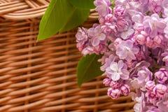 Fiori lilla nel canestro Fotografia Stock Libera da Diritti