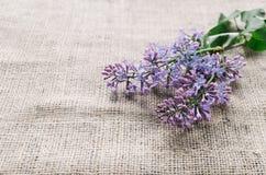 Fiori lilla porpora come fondo Fotografia Stock