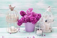 Fiori lilla in secchio, lanterne decorative della primavera con candl Immagini Stock