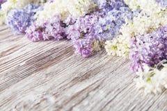 Fiori lilla su fondo di legno, ramo del fiore su legno d'annata Fotografia Stock