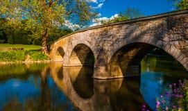 Fiori lungo Antietam Creek ed il ponte di Burnside, al campo di battaglia del cittadino di Antietam Fotografie Stock Libere da Diritti