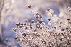 Fiori magici nello scintillare ghiacciato su un bello sfondo naturale immagini stock libere da diritti