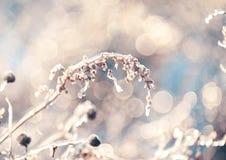 Fiori magici nello scintillare ghiacciato su un bello sfondo naturale fotografia stock