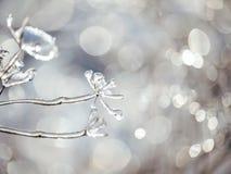 Fiori magici nello scintillare ghiacciato su un bello sfondo naturale Foto di arte Fuoco selettivo immagini stock