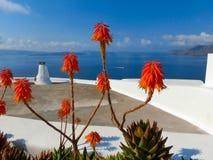Fiori, mare e cielo succulenti di Santorini Fotografia Stock Libera da Diritti