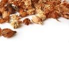 Fiori marroni asciutti di autunno Immagine Stock
