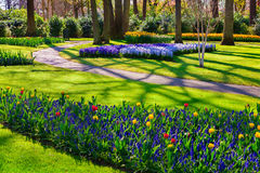 Fiori meravigliosi nel parco di Keukenhof Immagine Stock Libera da Diritti