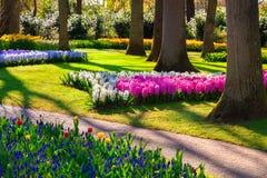 Fiori meravigliosi nel parco di Keukenhof Immagini Stock