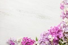 Fiori minuscoli del lillà su un vecchio fondo di legno Bordo floreale dentellare fotografia stock