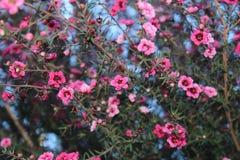 Fiori minuscoli rosa fotografie stock libere da diritti
