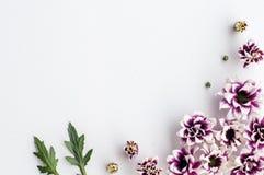 Fiori - modello su fondo bianco immagini stock