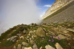 Fiori in montagna Fotografia Stock Libera da Diritti