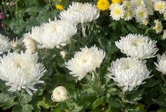 Fiori multicolori della molla, primo piano Mazzo di fiori variopinti o di mazzo del fiore Fotografie Stock Libere da Diritti