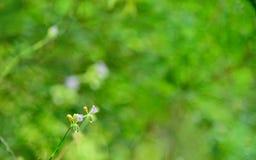 Fiori in natura su fondo verde fotografie stock