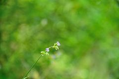 Fiori in natura su fondo verde immagine stock libera da diritti