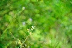 Fiori in natura su fondo verde fotografia stock libera da diritti