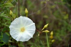 Fiori in natura su fondo verde fotografie stock libere da diritti