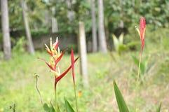 Fiori naturali nel giardino Fotografia Stock