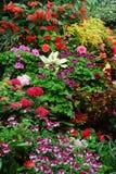 Fiori nei giardini del butchart Fotografie Stock Libere da Diritti