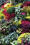 Fiori nei giardini del butchart Immagini Stock Libere da Diritti