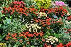 Fiori nei giardini del butchart immagini stock