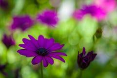Fiori nei giardini di Butchart, Victoria, Columbia Britannica immagini stock