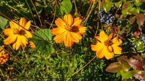 Fiori nel giardino nel giardino fotografia stock