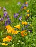 Fiori nel giardino Fotografia Stock Libera da Diritti