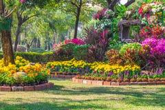 Fiori nel giardino Immagine Stock